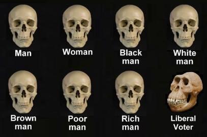 skulls liberal